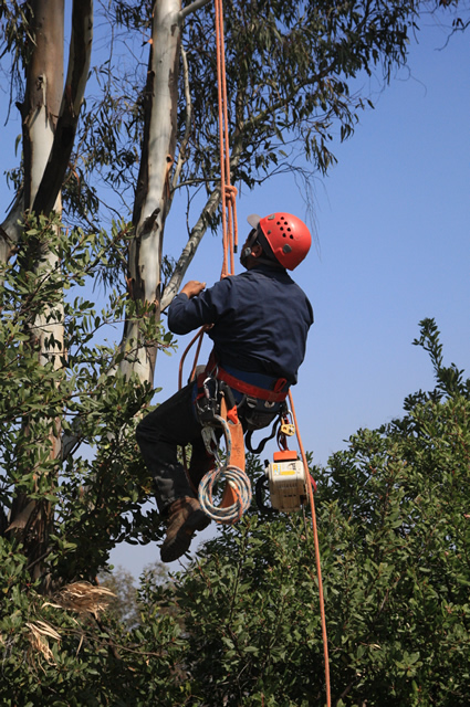 North County Tree Service Company
