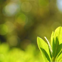 Green-Leaves-Bokeh-Summer-Landscape-